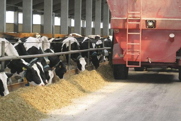 JOSERA cattle in the feeding rack
