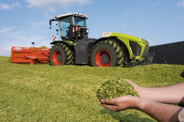 JOSILAC silo of maize