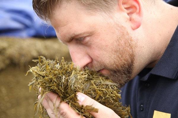 Сенсорний контроль силосу – виявлення та розгляд ознак поганої ферментації силосу