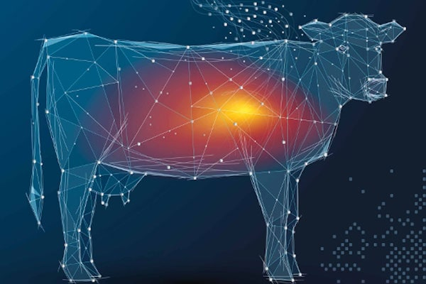 JOSERA Performance cow